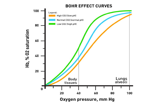 Graph showing The Bohr Effect